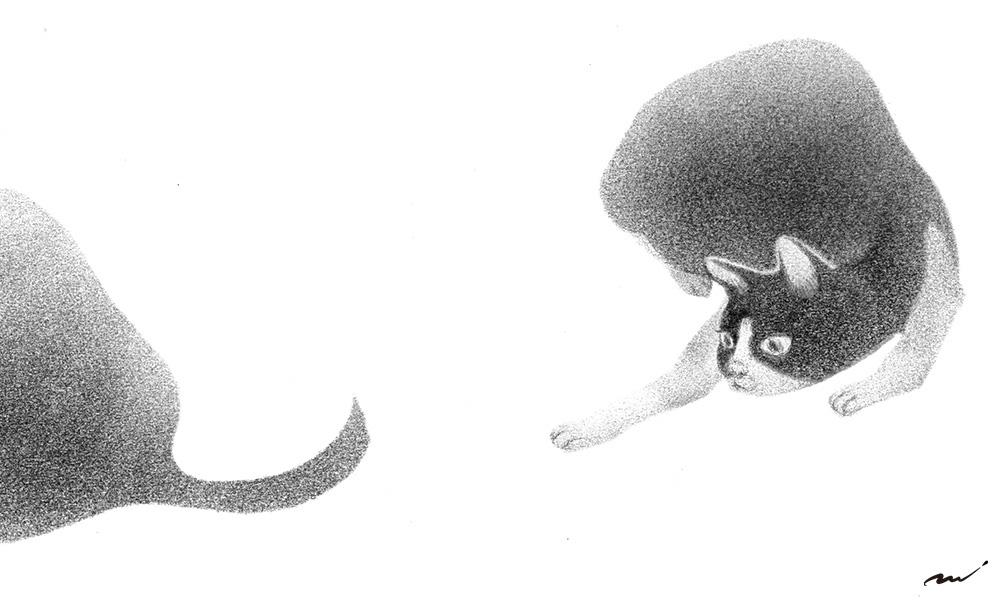 興味 猫のしっぽ